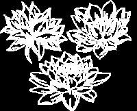 lotus graphic white